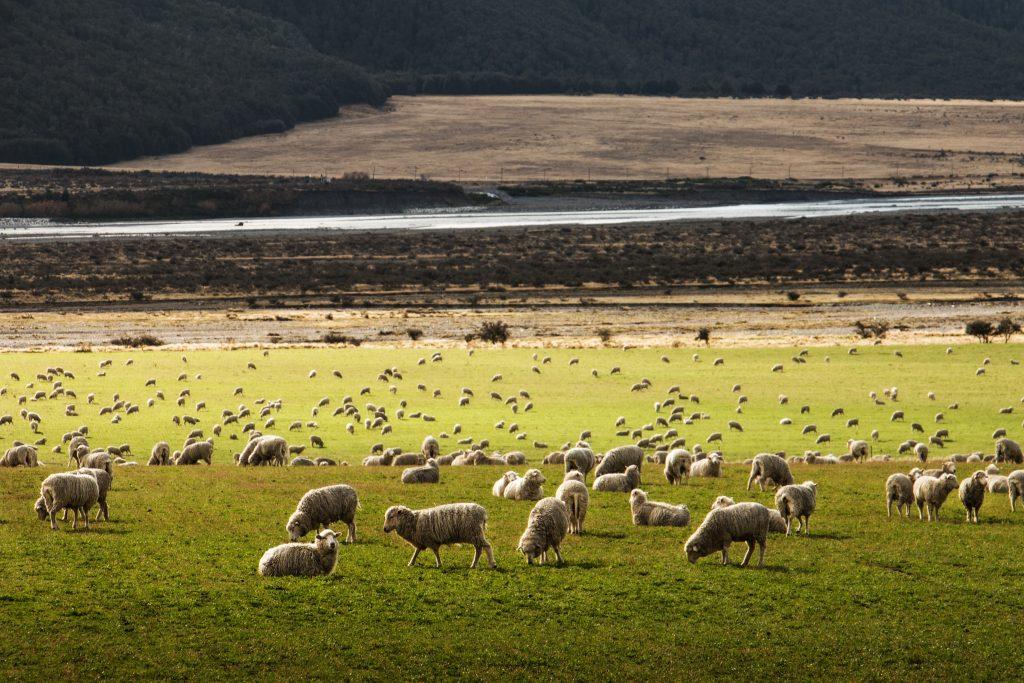 merino wool - worth the money