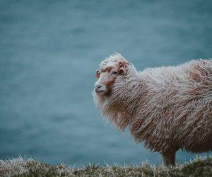 benefits-merino-wool-05