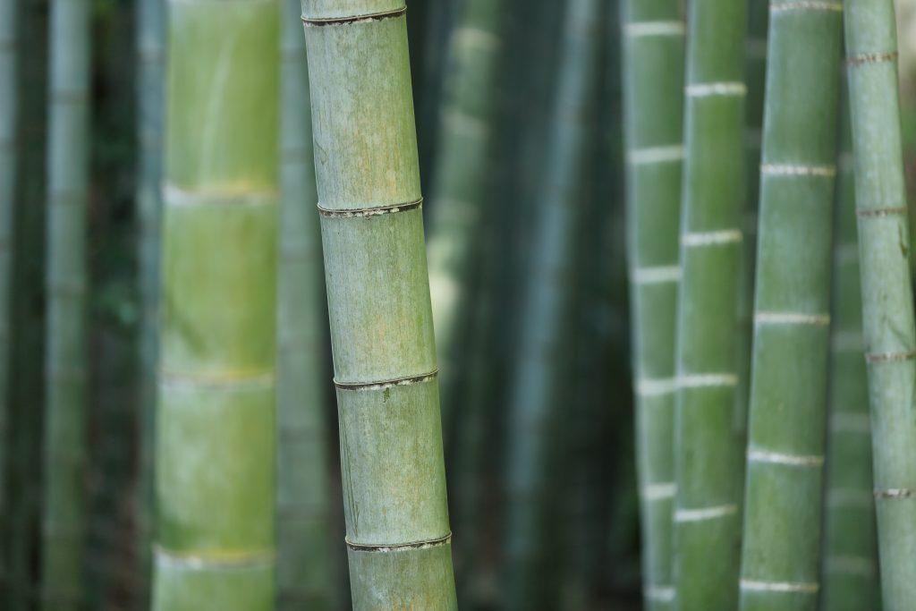 Bamboo-socks